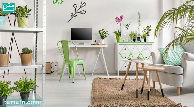 آموزش نگهداری گلهای خانگی و علت خشکی گل آپارتمانی