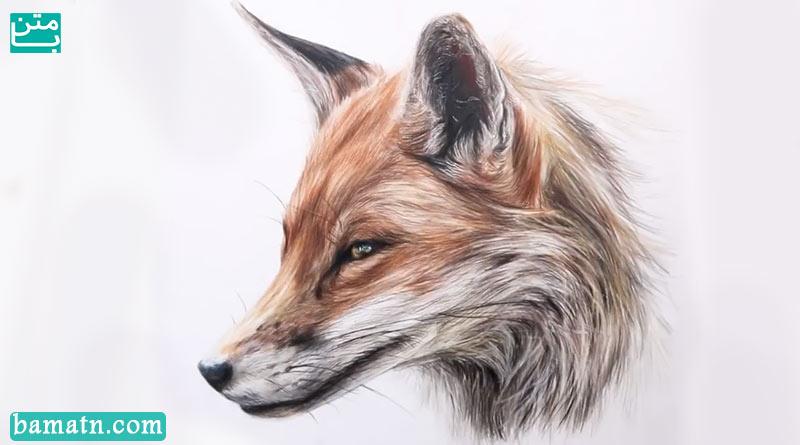 نقاشی روباه با مداد رنگی به صورت حرفه ای روی کاغذ